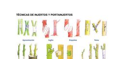 INJERTOS Y PORTAINJERTOS.pdf