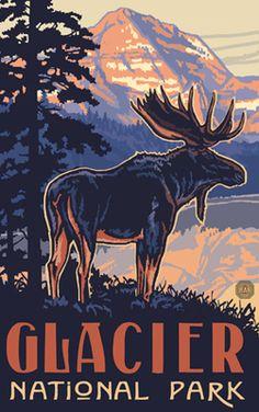 Glacier National Park Moose