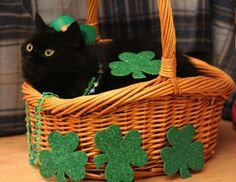 This cat who decided to transform his basket into a tiny magical clover patch | 15 Cats Who Can't Wait For St. Patrick'sDay