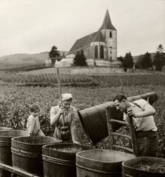 Turning grapes into wine,France,1945. Photo by Robert Doisneau