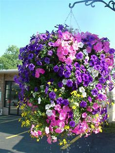 Hanging Baskets flower display