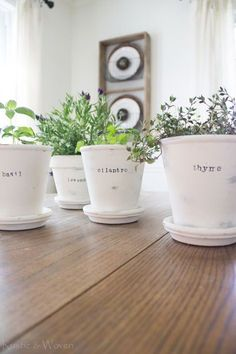 White pots w herbs in kit. Create Your Own Herb Garden Inside – we love these Herb Chalk Paint Terracotta Pots plus Inspire Your Joanna Gaines with these DIY Fixer Upper Farmhouse Ideas on Frugal Coupon Living.