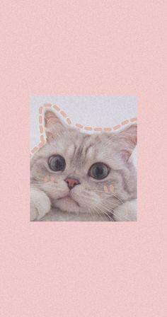 Lo hice yo pero la foto del gato no es mia Iphone Wallpaper Cat, Funny Cat Wallpaper, Bear Wallpaper, Cute Cartoon Wallpapers, Cute Baby Cats, Cute Cat Gif, Cute Little Animals, Kittens Cutest, Cute Animal Photos