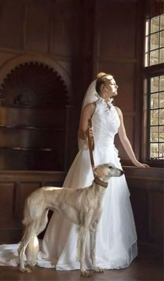 A modeling shoot for a bridal gown - but who even notices the gown with such a stunning saluki at the center of the page?! From FB: a photo of Kizzie, a 10 yr old saluki, posted by Noreen Wall.