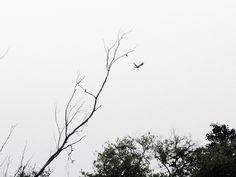 Flying towards Green