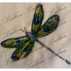 Dragonfly and peacock feather tattoo | rough first draft #31548 | CreateMyTattoo.com