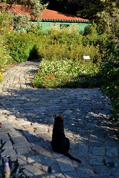 Gatito ~ Jardín Botánico
