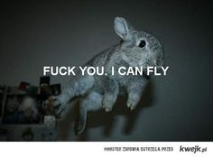 Bunny :P