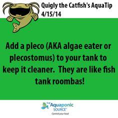 aquaponics tip of the day