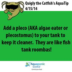 aquaponics tip of the day