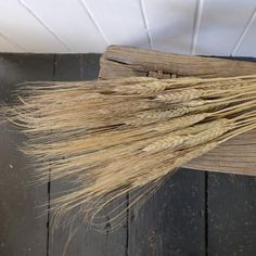 Dried wheat or triticum with a black wisp or beard.