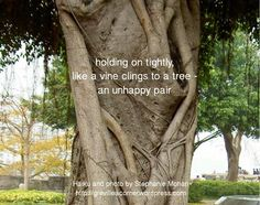 holding on tightly, like a vine clings to a tree - an unhappy pair Haiku by Stephanie Mohan - October 2014 photo by Stephanie Mohan