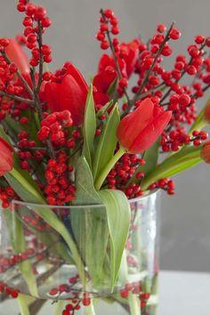 Ilexgreiner er vakkert sammen med røde tulipaner til jul.