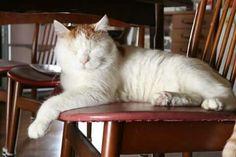 Bajo la mesa...un gran lugar para una siesta!! Slvh ❤