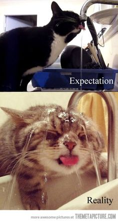 Expectations never go as planned…
