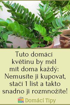Tuto domácí květinu by měl mít doma každý: Nemusíte ji kupovat, stačí 1 list a takto snadno ji rozmnožíte! Ikebana, Indoor Plants, Bonsai, Orchids, Flora, Herbs, Garden, Inside Plants, Garten