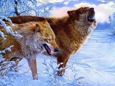 Resultados da Pesquisa de imagens do Google para http://www.zastavki.com/pictures/1600x1200/2012/Animals_Wolves_and_Foxes_Winter_Wolves_034445_.jpg