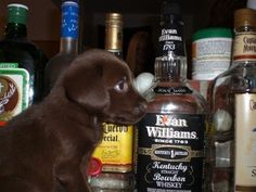Doggy and a bottle