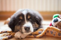 Hyper dogs can be aggressive & tend to unintentionally hurt people even if all they wanted was to play. Here are 7 ways that can help you calm your dog down.