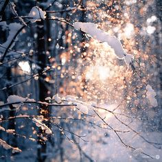 Sparkles in the snow.