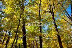 image of autumn trees. - View of autumn trees.