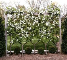 Vertical Rose Gardening Trellis - rose arches and other flower supports are visual highlights in the garden Garden Trellis, Garden Fencing, Garden Plants, Landscape Design, Garden Design, Orchard Design, Espalier Fruit Trees, Building A Trellis, Ornamental Plants