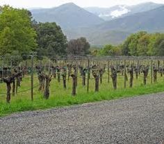 Budding vines at Wooldridge Creek Winery in southern Oregon. One of my favorite stops for tasting in the Applegate.