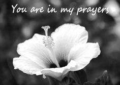 I pray for everyone. For the good to keep being good, for the bad to heal itself, for my loved ones, for my enemies to see the light. You are in my prayers. Sympathy Messages, Sympathy Quotes, Sympathy Cards, Little Prayer, My Prayer, Prayer Photos, Healing Images, Heartfelt Condolences, White Hibiscus
