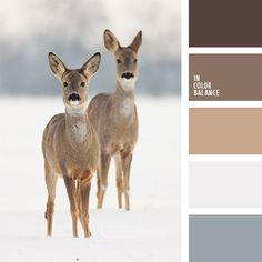 Animal color pallets