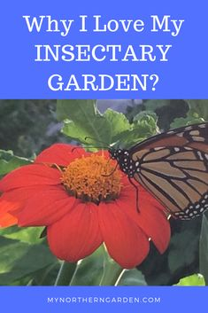 Insectary gardens are great for pollinators and gardeners. Vegetable Garden, Gardens, My Love, Plants, Veg Garden, My Boo, Home Vegetable Garden, Vegetable Gardening, Garden