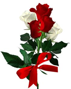 View album on Yandex. White Rose Png, Red Rose Png, Red And White Roses, Beautiful Flowers Wallpapers, Beautiful Rose Flowers, Elegant Flowers, Amazing Flowers, Good Morning Beautiful Pictures, Good Morning Flowers