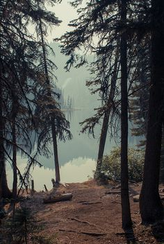 #Pine needled pathway to the lake ... #outdoors #lake #cabin #dock #summers