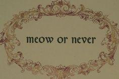 http://www.missourireview.com/tmr-blog/files/meow-or-never.jpg