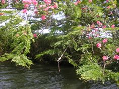 "Rivera florida del rio ""Espiritu Santo"". (Foto por César Méndez)"