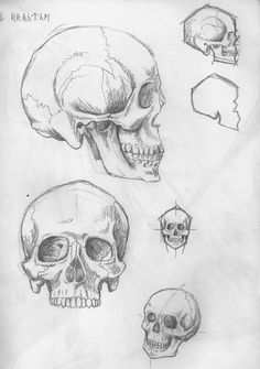 53 Ideas Drawing Skull Sketches For 2019 Anatomy Sketches, Anatomy Art, Anatomy Drawing, Drawing Sketches, Pencil Drawings, Art Drawings, Drawing Ideas, Drawing Art, Skull Anatomy