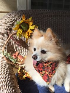 8 Questions With Cheri Fults Vp Of Recycled Pomeranians