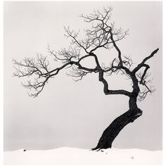 """""""Kussharo Lake Tree, Kotan, Hokkaido, Japan"""" by Michael Kenna 