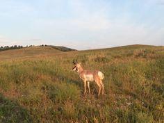 Custer State Park #SouthDakota