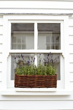 love the texture of lavender plants with the wicker