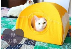 Want to know how to make a DIY cat tent? If you want to give your fur ball a place he or she can call their own, then this DIY pet project is for you.