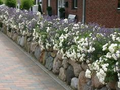 Best Indoor Hanging Plants, Hanging Plant Wall, Hydrangea Care, Hydrangea Flower, Rose Plant Care, Garden Front Of House, San Diego, Planting Roses, Back Gardens