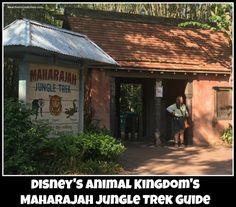 Maharajah Jungle Trek in the Asia section of Disney's Animal Kingdom theme park at the Walt Disney World Resort. Animal trail.