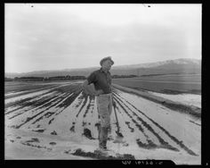 """California: The Art of Water"" at Cantor Arts Center, Standford, CA (by Dewitt Cheng)- Image: ""Field Worker Irrigating Alfalfa and Barley Fields,"" 1937 by Dorothea Lange •Gelatin silver print photography•"