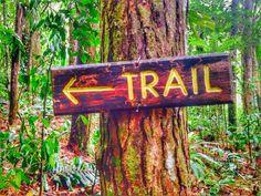 Tropical_Activities_Rainforest