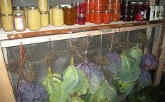 How To Store Food Without Refrigeration    If you're like many, a plethora of knowledge which should have been passed...    http://realfarmacy.com/storing-the-food-you-grew/