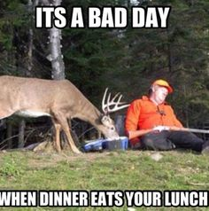 It's A Bad Day When Dinner Eats Your Lunch