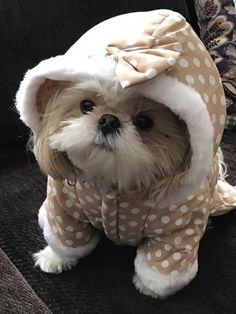 """Discover even more information on """"shih tzu puppies"""". Cute Funny Animals, Cute Baby Animals, Animals And Pets, Shih Tzu Puppy, Shih Tzus, Baby Shih Tzu, Cute Dogs And Puppies, I Love Dogs, Doggies"""