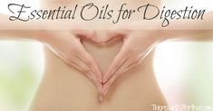 There are so many fantastic essential oils for digestion that it may be hard to choose which ones are right for you. Here are my top 3 blends for digestion. Essential Oils Digestion, Essential Oils For Pain, Homemade Essential Oils, Essential Oil Uses, Young Living Essential Oils, Food For Digestion, Yl Oils, Oil Pulling, Body Organs