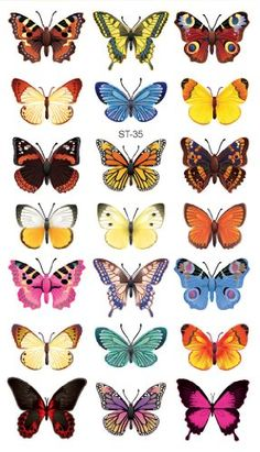 Meaning of butterfly tattoos and pictures of cute and small Butterfly Tattoo designs and images for on the wrist, shoulder, foot or lower back.