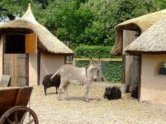 https://www.fijnuit.nl/blog/dierenpark-oikos-in-ruinen-sluit-haar-deuren Helaas sluit na 9 jaar Park Oikos haar deuren. Breng nog snel een laatste bezoek.